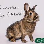 GSS Grundstück Service Sordon wünscht frohe Ostern